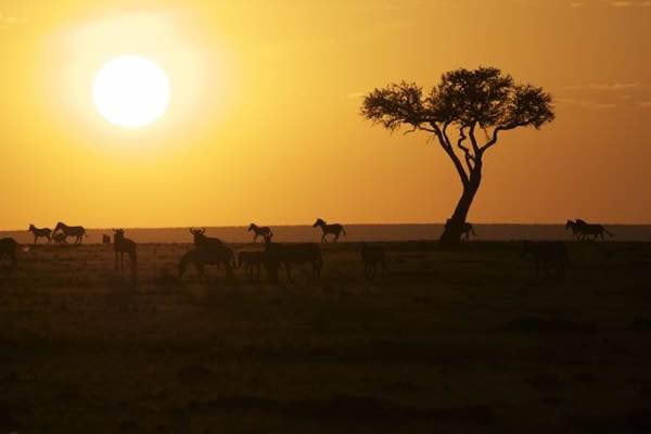 Ride Horses in Big Game Country-- An African Horseback Safari