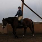 Indoor Horses