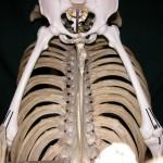 Anatomy of Bareback Riding