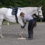 SURE FOOT Equine Stability Program® allows horses to overcome old habits