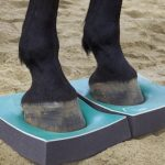 SURE FOOT™ Case History – the 1st Horse