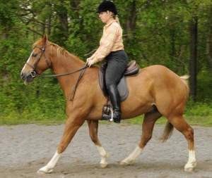 Photo 1. My heels are jammed down and I have leaned forward to ask my horse to go back. This put my weight on the horse's forehand causing him to raise his neck and hollow his back.