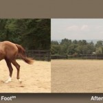 The SURE FOOT® Equine Stability Program