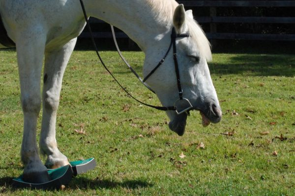 SURE FOOT® Success Story - a horse with ring bone