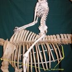 Comparable Parts – You are more like your horse than you think!
